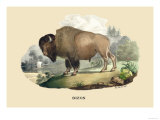 Bison Prints by E.f. Noel