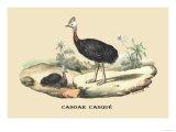 Casoar Casque Poster by E.f. Noel