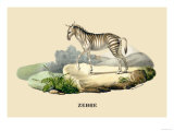 Zebre Prints by E.f. Noel
