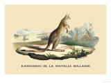 Kangouroo de la Nouvelle Hollande Prints by E.f. Noel