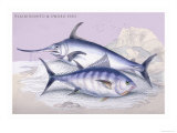 Plain Bonito and Swordfish Posters by Robert Hamilton