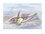 Gemmous Dragonet Poster by Robert Hamilton