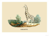 Giraffe Prints by E.f. Noel
