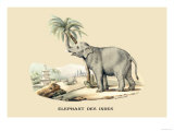 Elephant d'Inde Print by E.f. Noel