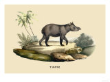 Tapir Prints by E.f. Noel