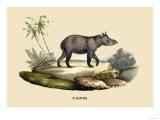 Tapir Prints by E.f. Noel
