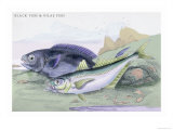 Blackfish and Pilas Fish Prints by Robert Hamilton
