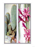 Cactus and Flower Posters