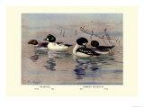 Golden-Eye and Barrow's Golden-Eye Ducks Posters by Allan Brooks