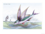 Flying Fish Prints by Robert Hamilton
