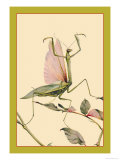 The Praying Mantis Prints by Edward Detmold