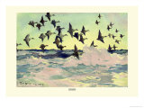 Eiders Poster by Frank Weston Benson