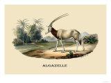 Algazelle Print by E.f. Noel