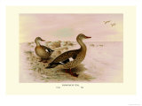 Madagascan Teal Prints by Henrick Gronvold