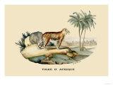 Tigre d'Afrique Prints by E.f. Noel
