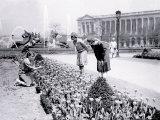 Ladies Picking Flowers, Philadelphia, Pennsylvania Prints