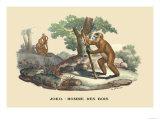 JOKO, Homme des Bois Posters by E.f. Noel