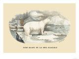 Ours Blanc de la Mer Glaciale Prints by E.f. Noel