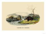 Castor du Canada Art by E.f. Noel