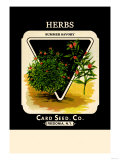 Herbs: Summer Savory Prints