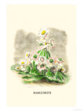 Marguerite Prints by J.J. Grandville