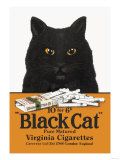 Black Cat Pure Matured Virginia Cigarettes Plakater