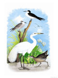 The Great White Egret Prints by Theodore Jasper
