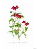 Pelargonium Lady Mary Fox Posters by H.g. Moon