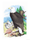 The Bald Eagle Posters by Theodore Jasper