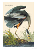 Great Blue Heron Premium Giclee Print by John James Audubon