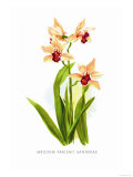 Mbidium Parishii Sanderae Posters by H.g. Moon