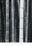 Bamboo no. 4, Kyoto Art by Chris Honeysett