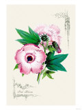 Pink Hibiscus Posters
