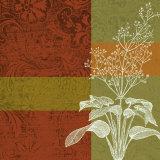 Plant Study I Prints by Paula Scaletta