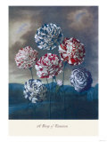 Group of Carnations Print