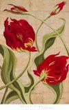 Tulip Tango II Prints by Brian O'neill