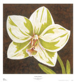 Surabaya Orchid II Posters by Judy Shelby