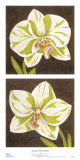 Surabaya Orchids Print by Judy Shelby