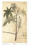 Botanica II Art by Ludwig Van Houtte