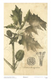 Botanica I Posters by Ludwig Van Houtte