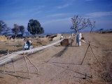 Processing Cotton in a Village, Punjab, Pakistan, Asia Photographic Print by Richard Ashworth