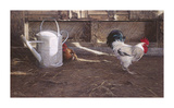 Rooster And Watering Can Premium Giclee Print by Peter Munro