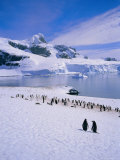 Gentoo Penguins, Antarctic Peninsula, Antarctica Photographic Print by Geoff Renner