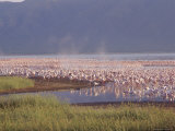 Flamingos, Lake Bogoria, Kenya, Africa Photographic Print by Storm Stanley