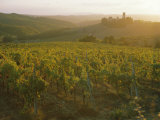 Vineyards and Ancient Monastery, Badia a Passignano, Greve, Chianti Classico, Tuscany, Italy Photographic Print by Michael Newton