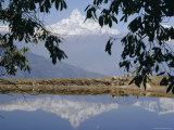 Mount Machapuchare (Machhapuchhare) Reflected in Phewa Lake, Himalayas, Nepal, Asia Photographic Print by N A Callow