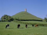 Cattle Grazing in Front of Glastonbury Tor, Glastonbury, Somerset, England, UK, Europe Photographic Print by Philip Craven