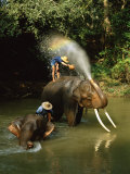 Elephants Being Washed in the River Near Chiang Mai, the North, Thailand Fotografie-Druck von Gavin Hellier