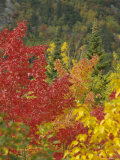 Fall Colours, Eastern Townships, Quebec, Canada, North America Photographic Print by Maurice Joseph