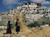 Harvesting Below Thikse Gompa (Tikse Monastery), Ladakh, India, Asia Photographic Print by Sybil Sassoon